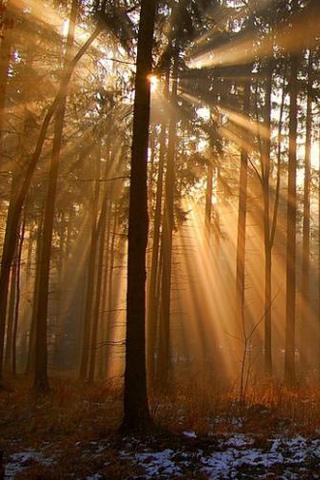 wallpaper iPhone Forest Sunbeams