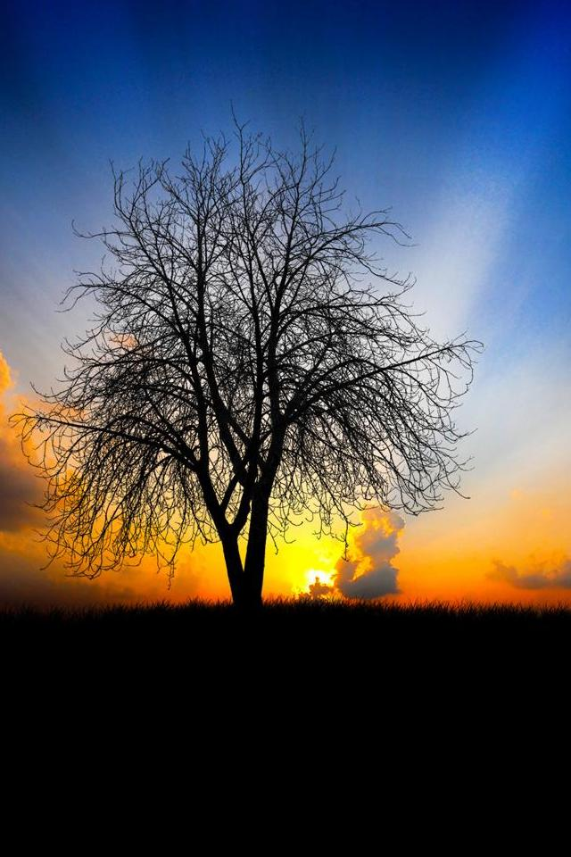 wallpaper iPhone One Tree Sunrise