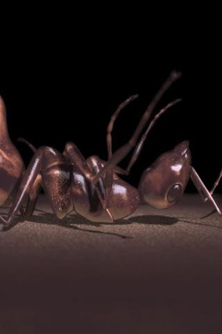 wallpaper iPhone ants iphone