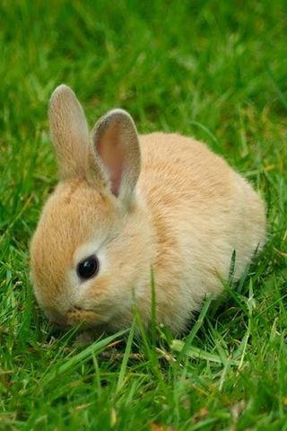 wallpaper iPhone Baby Bunny