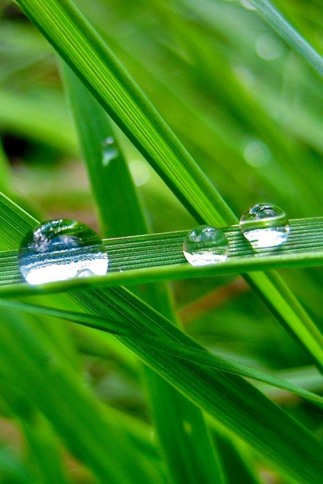 wallpaper iPhone Dew Drops