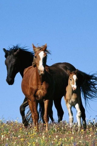 wallpaper iPhone Wild Horses