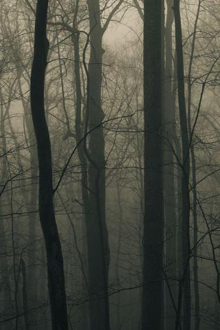 wallpaper iPhone Foggy Forest