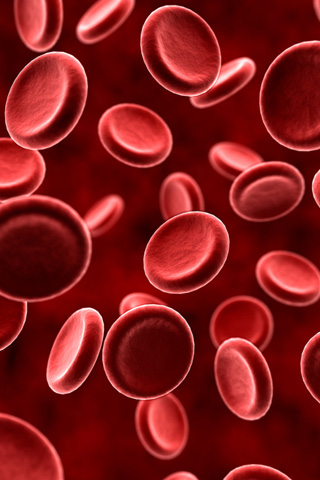 wallpaper iPhone Red Blood Cells
