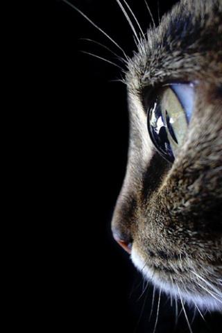 wallpaper iPhone Feline Profile