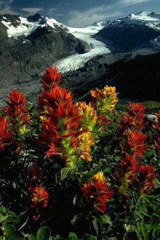 Wallpaper iPhone Mountain Flowers 3673