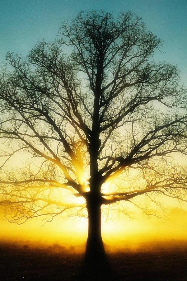 wallpaper iPhone Sunrise Tree