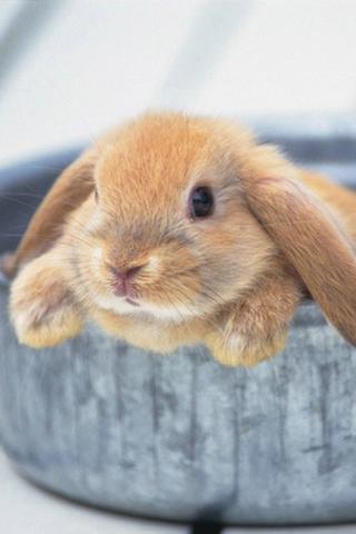 wallpaper iPhone Cute Bunny