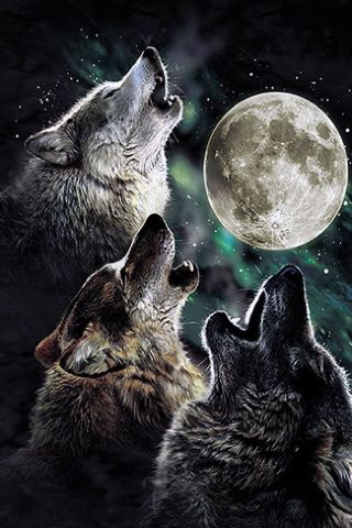 wallpaper iPhone Three Wolf