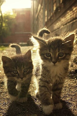 wallpaper iPhone Kittens