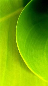 wallpaper iPhone Leaf Swirl 1