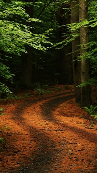 wallpaper iPhone Forest Path Road 12
