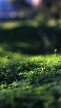 wallpaper iPhone Grass Level 2